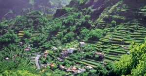The famous irrigated terraces of Madeira, now used for wine