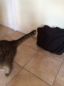 The work bag, and the Pavlovian cat