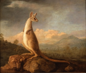 Stubbs' 'kongorou', painted for Sir Joseph Banks. (Courtesy of The Art Fund)