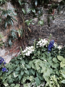 Foxgloves light up a dark corner - and the Clematis armandii must have been brilliant earlier in the year.