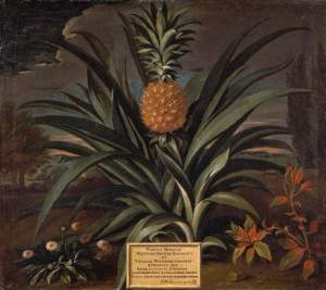 Decker's pineapple, painted by Theodore Netscher. (Credit: The Fitzwilliam Museum, Cambridge.)