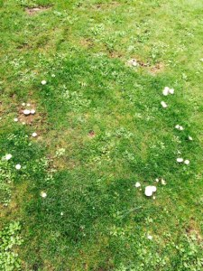A fairy ring of fungus.