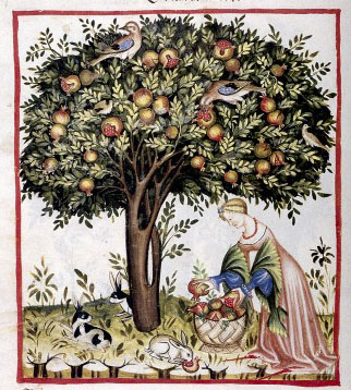 A lady tries to save the crop from predatory wildlife. Credit: Wellcome Library, London. Wellcome Images images@wellcome.ac.uk http://wellcomeimages.org Pomegranate Tree. Codex Vindobonensis series nova 2644 der Osesterreichischen Nationalbibliothek Graz, Austria: Akademische Druck-u Verlagsanstalt, 1967. Drawing Tacuinum sanitatis in medicina Published: - Copyrighted work available under Creative Commons Attribution only licence CC BY 4.0 http://creativecommons.org/licenses/by/4.0/