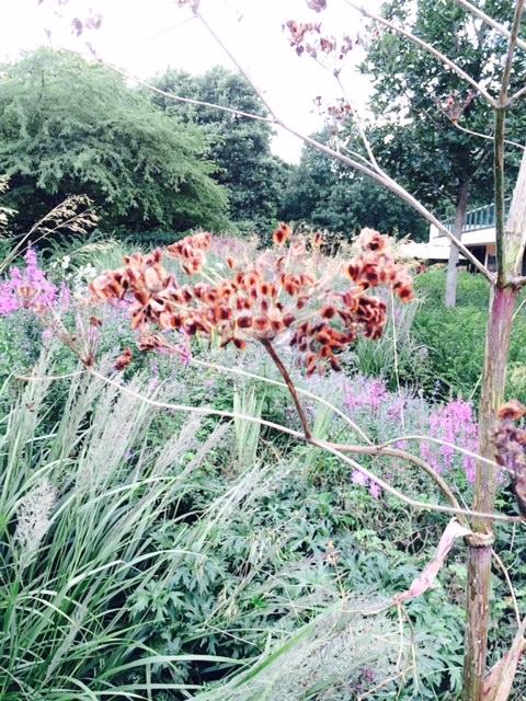 Spectacular seedhead (parsley family?).
