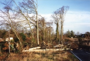 Beeches after the 1987 storm.