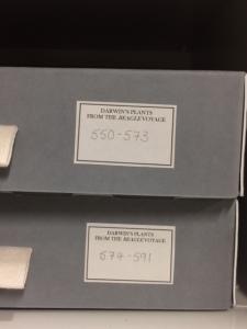 Some of Darwin's specimens.