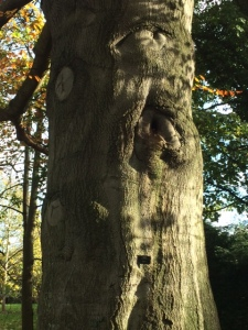 The trunk of one of the oldest beeches in the Botanic Garden.