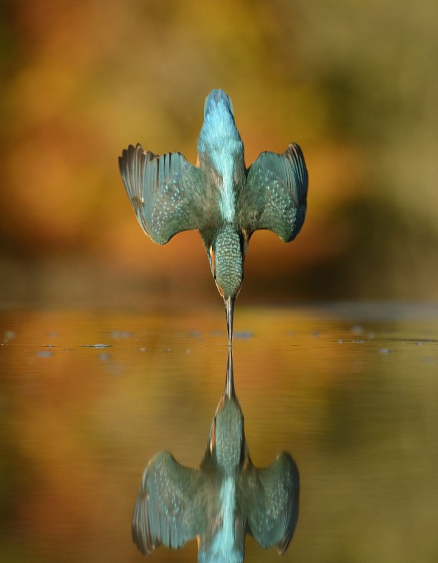 Alan McFadyen's 720,001st shot. (c) Mercuty Press.