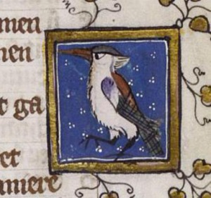 This medieval kingfisher (from Jacob van Maerlant's 'Marvels of Nature', BerlinSBB mgf52) looks remarkably like a kookaburra.