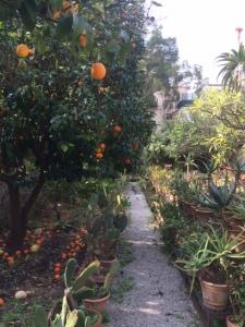 A path through the citrus fruits.