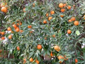 More oranges.