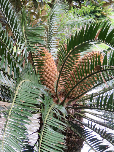 One of the healthier-looking palms.