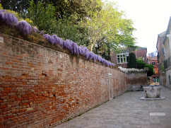 Wisteria by the yard in Venice, May 2015