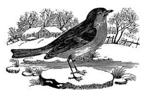 Thomas Bewick (inevitably) got the robin exactly right.