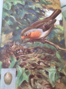 Seaby's picture of the robin, its young, and its egg.