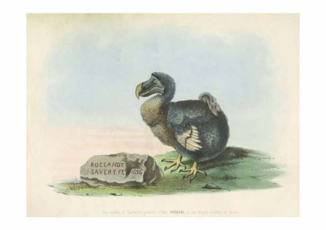 The most famous image of the dodo, by Dutch artist Roelant Savery: this version is the frontispiece to Hugh Strickland's 1848 The Dodo and its Kindred.