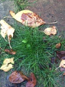 Just grass ...